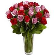 2 Dozen Red and Pink Roses Vased