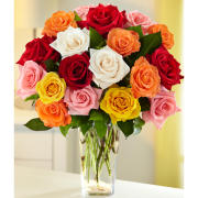 Deal of the Day-2 Dozen Assorted colors