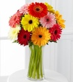 The Gerbera Daisy Delight
