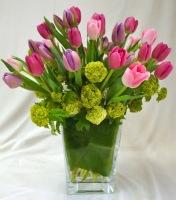 Tulip Radiance