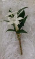 Stephanotis with Brown and Green Trim
