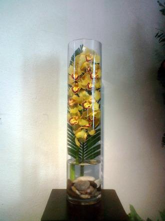 Hawaiian Cymbidium