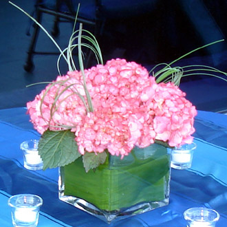 Lovely Hydrangea