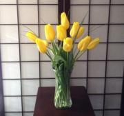 Joyful Yellow Tulips