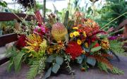 Fall Protea