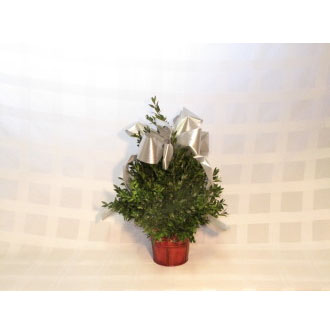 Small Boxwood Tree-Silver Ribbon