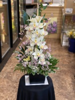 Simply Orchids  DD-150