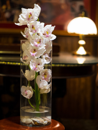 ShowCase Orchids      DD-152