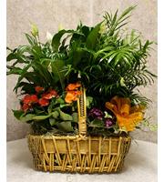 Joyful Plant Basket