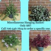 Miscellaneous Hanging Basket