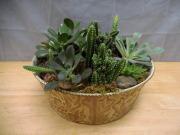 Succulent Garden *Large*