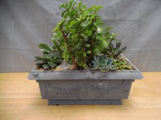 Succulent Garden *Medium*