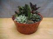 Succulent Dish Garden *Small*