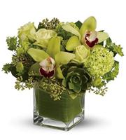 Green garden orchids