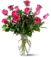 Standard Hot Pink Roses