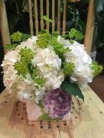 Pure Hydrangea Love