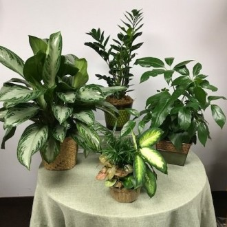 Green Plants - Designer\'s Choice