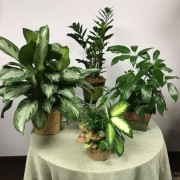 Green Plants - Designer's Choice