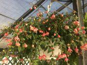 Assorted Outdoor Hanging Baskets