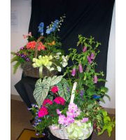 ANNUAL PLANTS BASKET