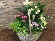 Plant French Garden- Grey basket