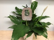 Windchime Garden Planter