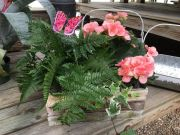 Wooden crate with Fern plant & Begonia plant