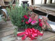 Lavender & Roses Basket of plants