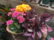 Blooming Garden- Triple in Basket