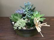 SUCCULENTS CERAMIC PLANTER GARDEN