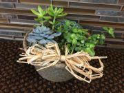 Succulent Garden-Tabletop
