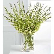 Beautiful Fall Abundant Orchid Stems Vased 10, 20 or 30 Stems vased