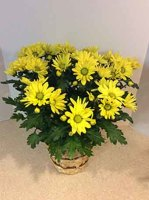 Yellow Daisy Plant Basket