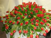Funeral Casket Spray Red Roses