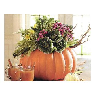 Pumpkin Splendor