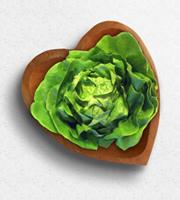 Flowers By Bauers & Greenhouses European Bibb Lettuce
