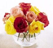 Mixed Roses in a Bowl