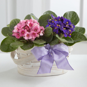 Violet Views Blooming Basket
