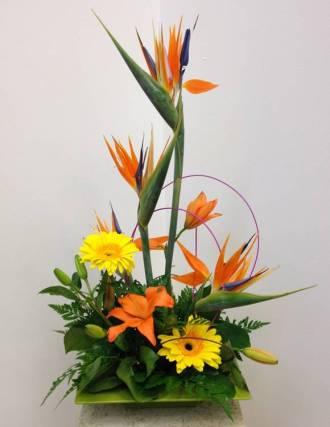 Steve Coden Flowers Bird Of Paradise Upscale Flower