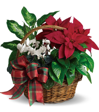 Holiday Planter Gardens - An Exclusive by Sunnyslope Floral