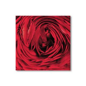 12x12 Red Rose Framed Canvas Print