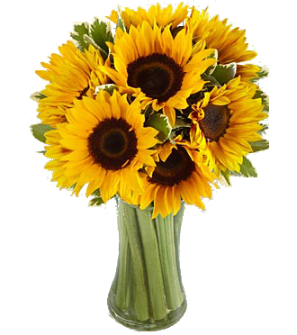 Sunflower  Cheer