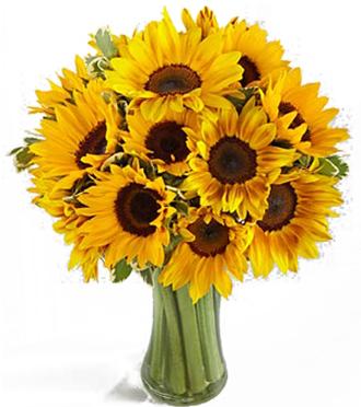 Sunflower Show Stopper