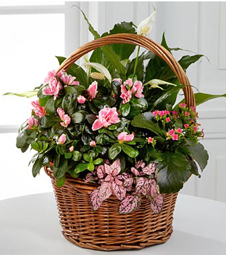 Pretty In Pink European Garden