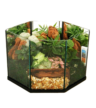 Send terrarium gifts and other plants for sympathy from friends to Grand Rapids, Rockford, Alto, Holland and Byron Center with Sunnyslope Floral