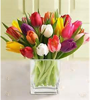 Mix of tulips in a vase
