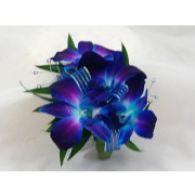 Blue Orchid Corsage