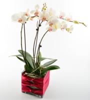 Orchid Terrace