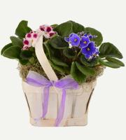 Sm. Violet Basket