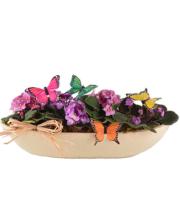Violet Flutters